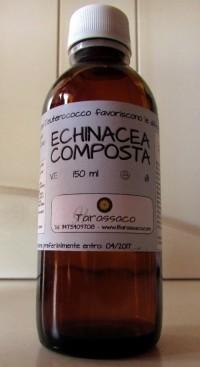 Settembre: disponibile l'Echinacea per le difese immunitarie – Eventi e Manifestazioni
